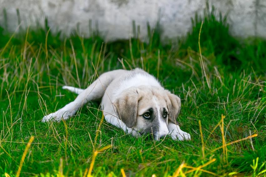 Kaip susigrąžinti dingusį šunį: į pagalbą ateis mobilioji programėlė